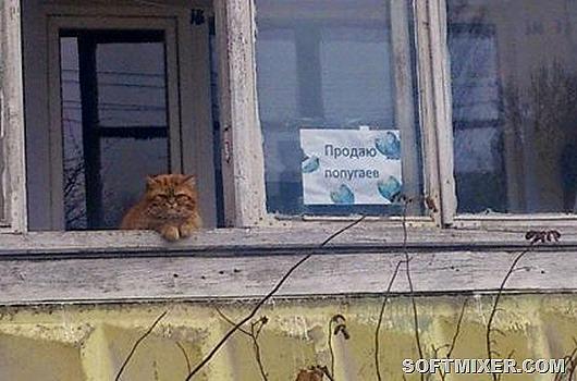 1401275924_rossiya-14