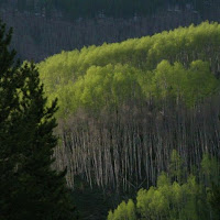 crested_butte