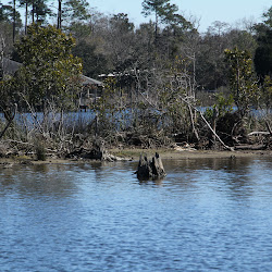 Fowl Marsh from Boat Feb3 2013 213