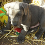 Star & True Blues February 21, 2008 Litter - HPIM1215.JPG