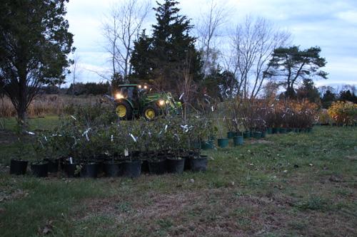 Hammo Fall Planting - Jim Murtagh - BC3G2502.jpg