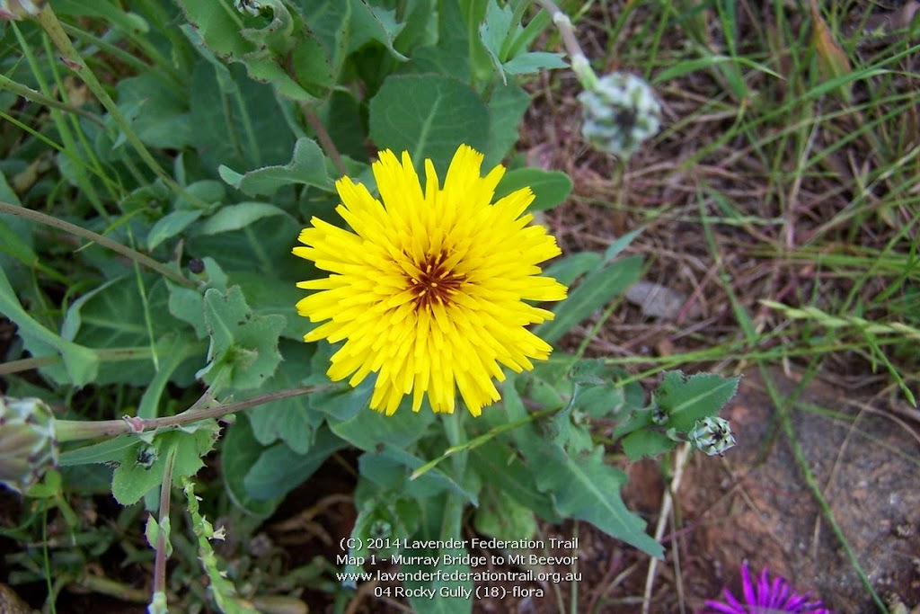 04 Rocky Gully (18)-flora