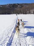 Dog Sledding, Mount Tremblant  [2004]