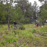 460' of Fence Line Clearing Sept 2014: Jack cutting while Jeff removes debris. What a team!