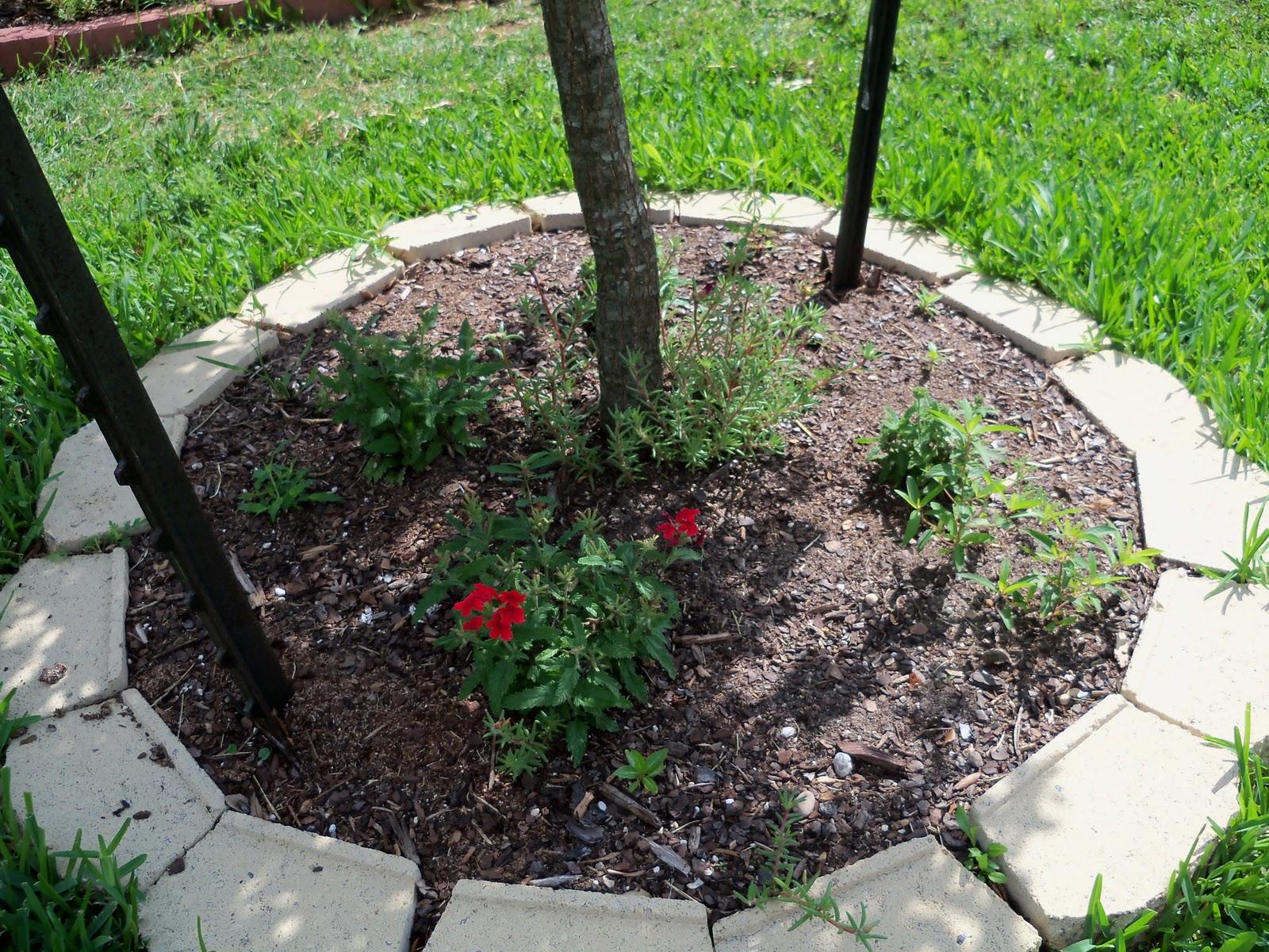 Gardening 2010, Part Two - 101_2750.JPG