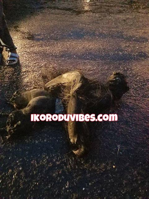 JUST IN! Another Suspected Badoo Gang Caught In Ebute Ikorodu (Photos)