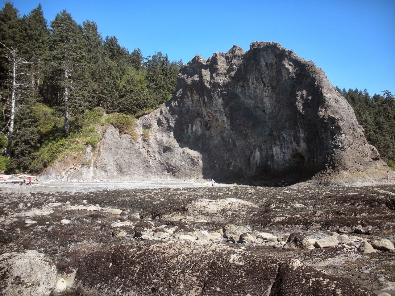 Rialto Beach May 2013 - DSCN0208.JPG