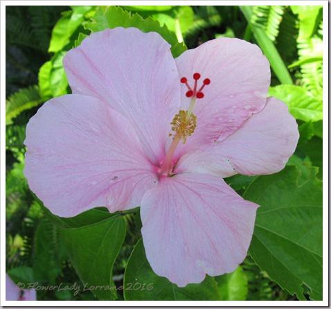 08-29-pink-hib