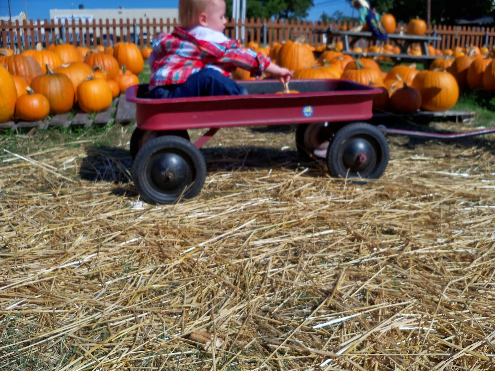 Pumpkin Patch - 115_8252.JPG