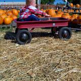 Pumpkin Patch - 115_8252.JPG