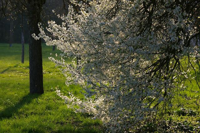 Les Hautes-Lisières (Rouvres, 28), 24 mars 2011. Photo : J.-M. Gayman