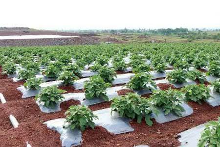 राष्ट्रीय शाश्वत शेती अभियानांतर्गत परंपरागत कृषि विकास योजना (सेंद्रीय शेती)