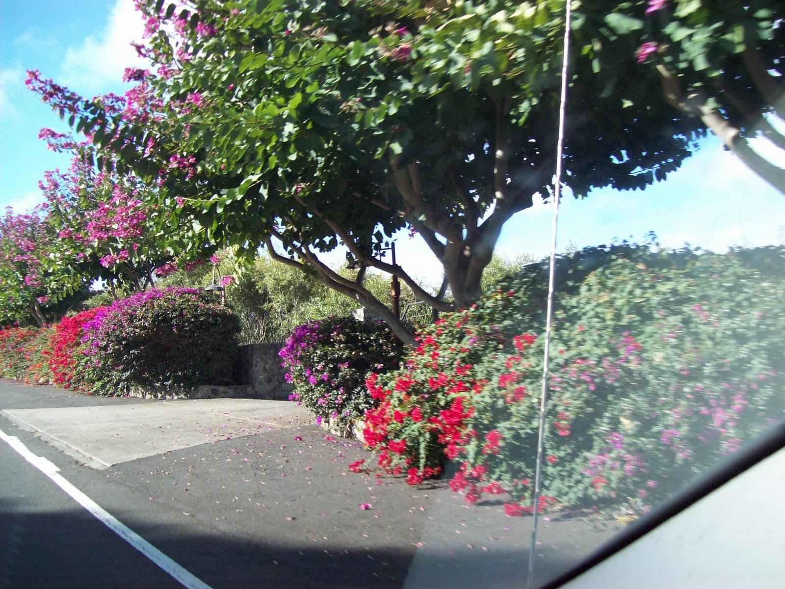 Hawaii Day 8 - 100_8003.JPG