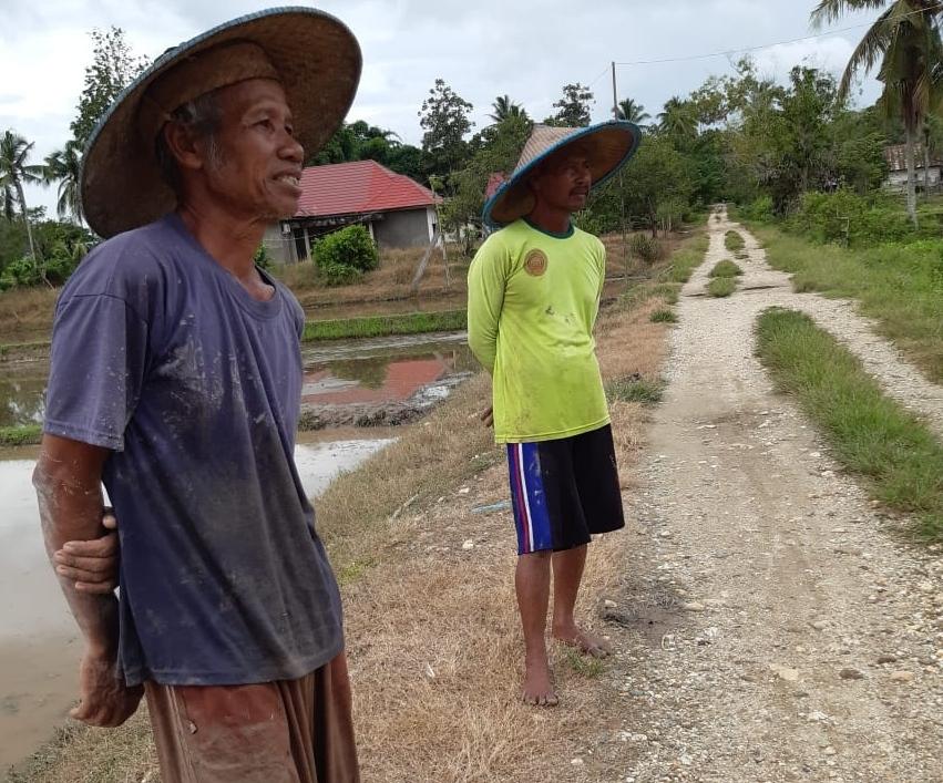 Kelompok Tani Sido Maju Desa Wawouru Atasi Masa Corona Dengan Padi Varietas Trisakti