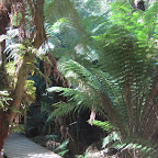 Apollo Bay - Rainforest Walk
