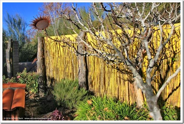 151230_Tucson_Tohono-Chul-Park_0045