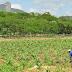 Governo destina R$ 5,4 milhões para pagamento do Garantia-Safra a agricultores de 58 municípios paraibanos