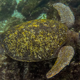 galapagos - Galapagos_FB_2-125.jpg