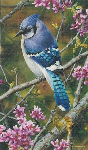 brenders_flash_of_sapphire_blue_jay.jpg