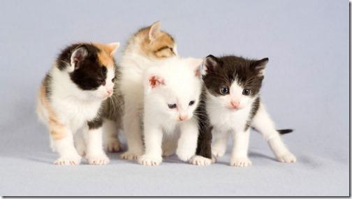 22 fotos de gats (11)