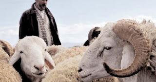 L'approche de l'Aïd El Adha dope le marché: La saignée des bourses annoncée