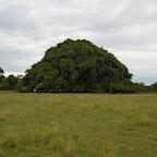 Hombre minúsculo, árbol gigante