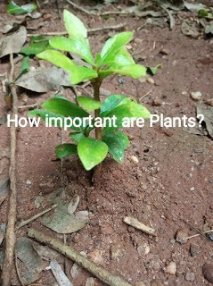 How important are Plants?