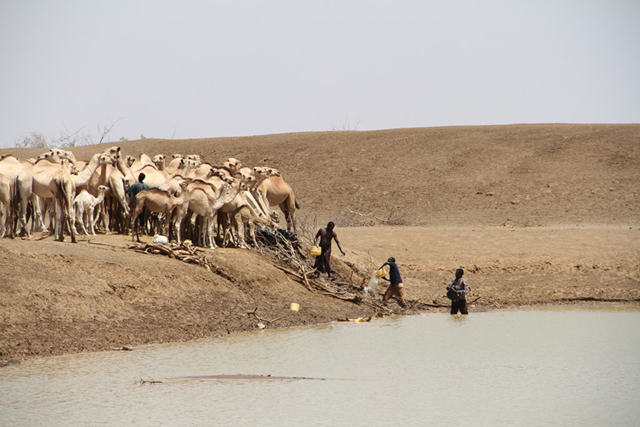 Herders collect water with camels at one of the few remaining water points in drought-affected Bandarero village, Moyale County, Kenya. Photo: Rita Maingi/ OCHA