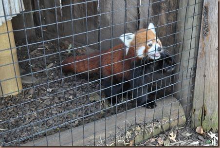 08-17-16 Boise Zoo 29