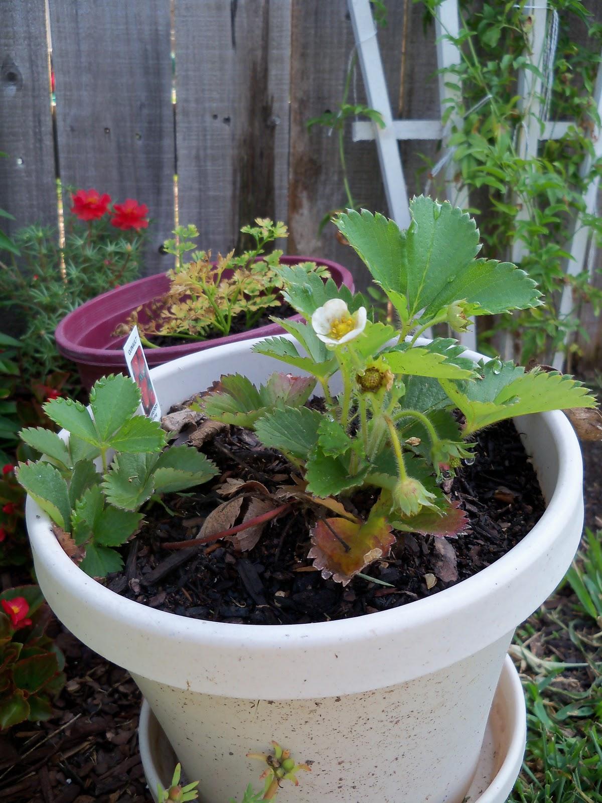 Gardening 2010, Part Two - 101_3273.JPG