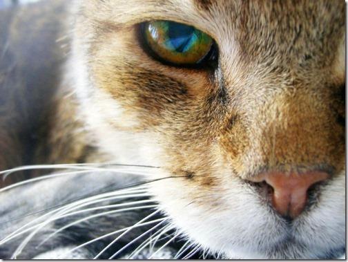 fotos de gatos (12)