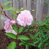 Gardening 2010 - 101_0645.JPG
