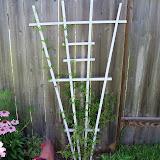 Gardening 2010, Part Three - 101_3675.JPG