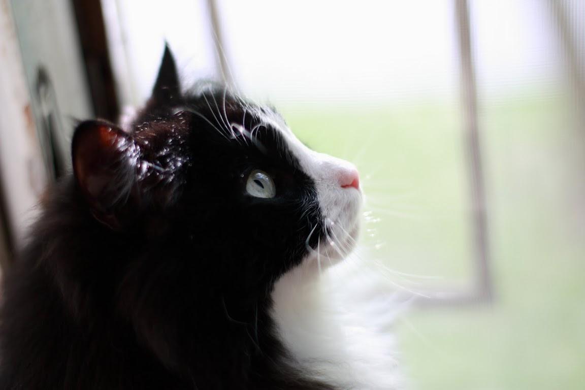 [кот]