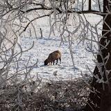 Winter - Winter-038.jpg