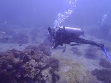 Anastasia on the reef hook!