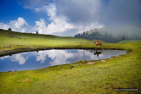 Payee Meadows in Kaghan Valley Pakistan