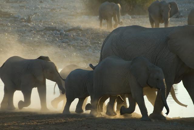 أفضل ما في أفريقيا  Best of Africa Namibia_090907111121