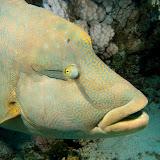 Ερυθρα θαλασσα 2011