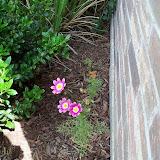 Gardening 2010, Part Two - 101_2853.JPG