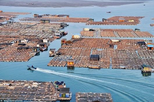 The Floating Fish Farms of China