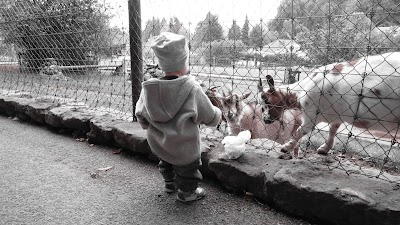 Langenthal Zoo