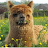 Ivy Pazol avatar image