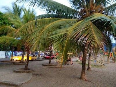 Palm trees in San José
