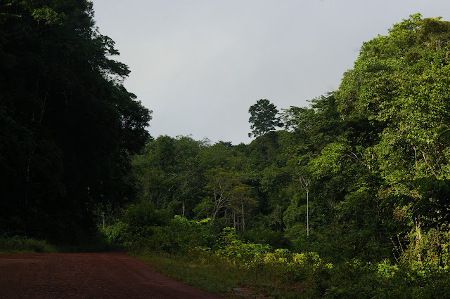 Piste en face de l'Auberge des Orpailleurs (Guyane). 25 novembre 2011. Photo : J.-M. Gayman