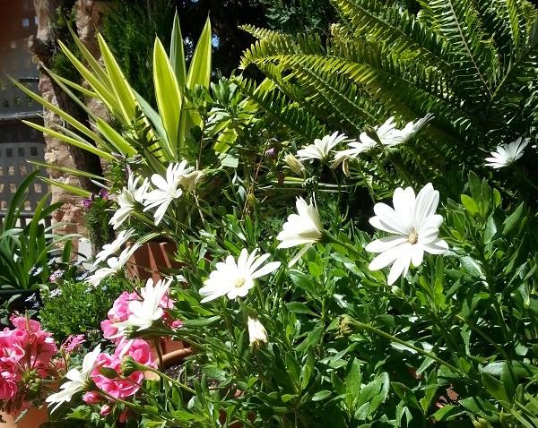 plantas y flores del jardín