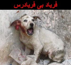 بازهم کشتار بیرحمانه سگها در ایران؛ بازهم تظاهرات اعتراضی حامیان حیوانات