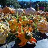 Pumpkin Patch 2014 - 116_4415.JPG