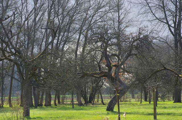 Printemps. Les Hautes-Lisières (Rouvres, 28), 19 mars 2012. Photo : J.-M. Gayman