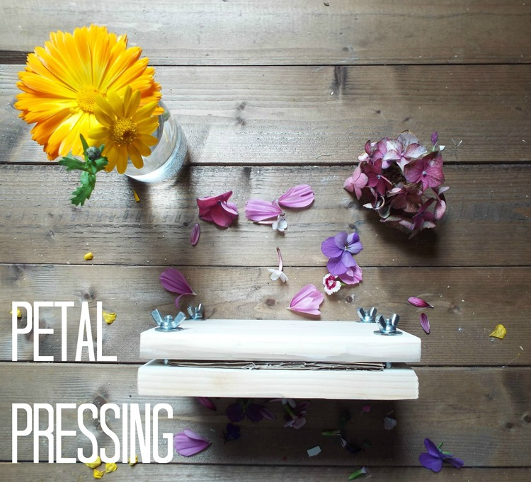 how to press petals